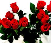 One–Dozen-Red-Roses-conten