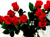 One--Dozen-Red-Roses-conten