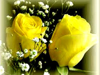 One--Dozen-Yellow-Roses_con